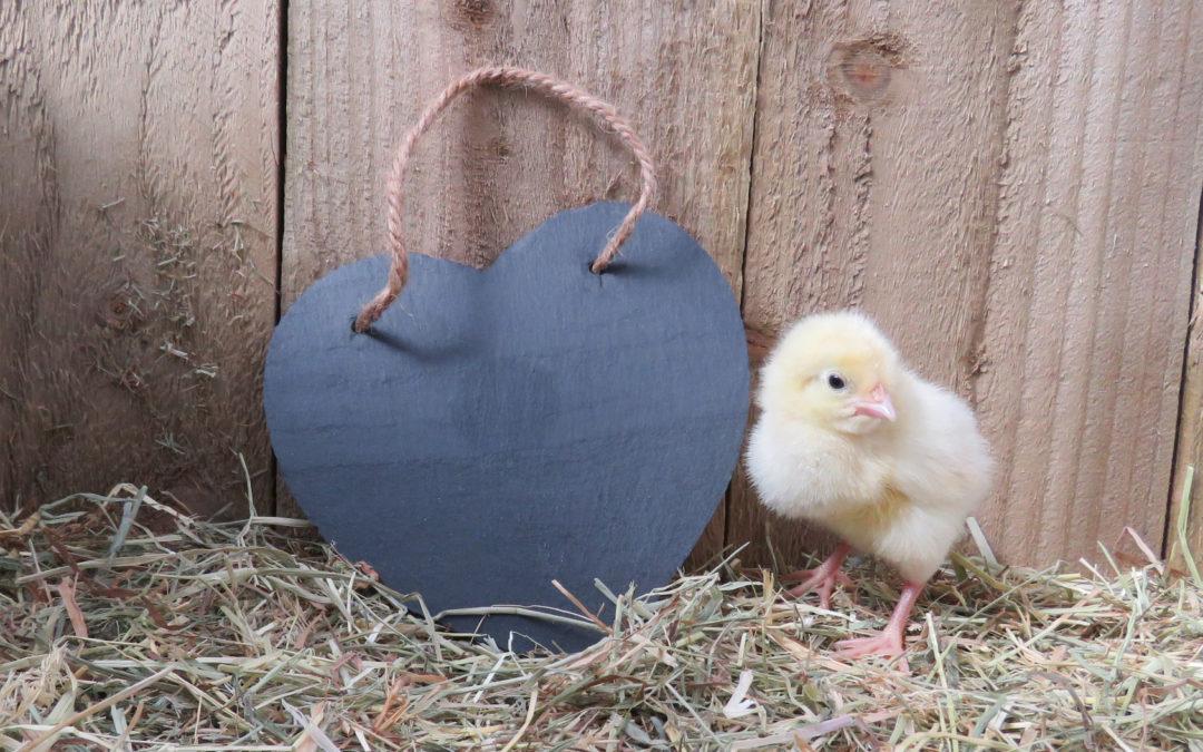egg dating
